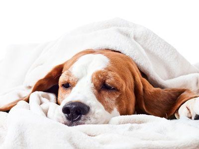 Hondenziekten