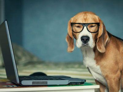 Hondenblog