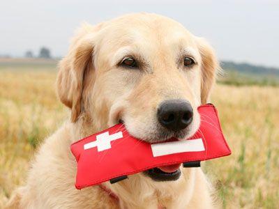 Honden EHBO
