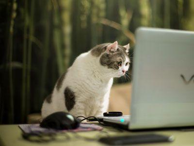 Kattenblog