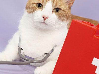 Katten EHBO