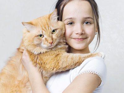 Katten alles over verzorging en medische zorg dierendokters - Hoe een kamer van een kind te versieren ...
