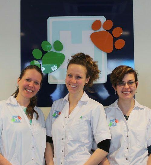 team dierendokters zandvoort