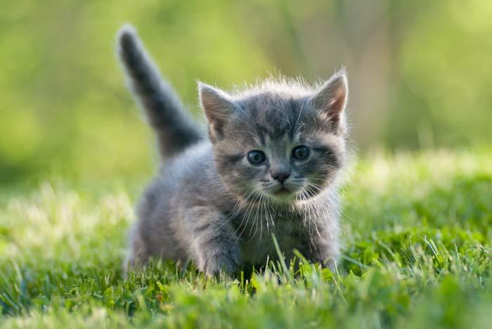 Kittens  Over Verzorging En Medische Zorg DierenDokters