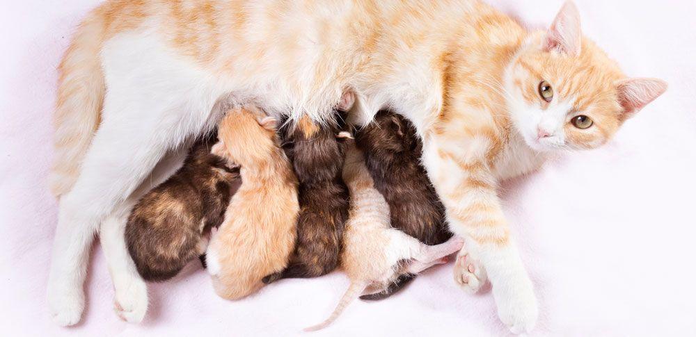 pasgeboren kittens kittens verzorging