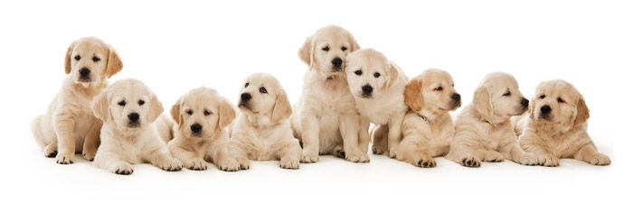 b7167d93979375 1001 hondennamen voor je pup