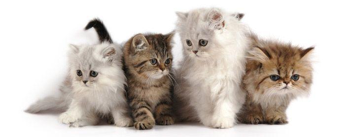 Betere 1001 Kattennamen voor kitten, poes of kater KL-33