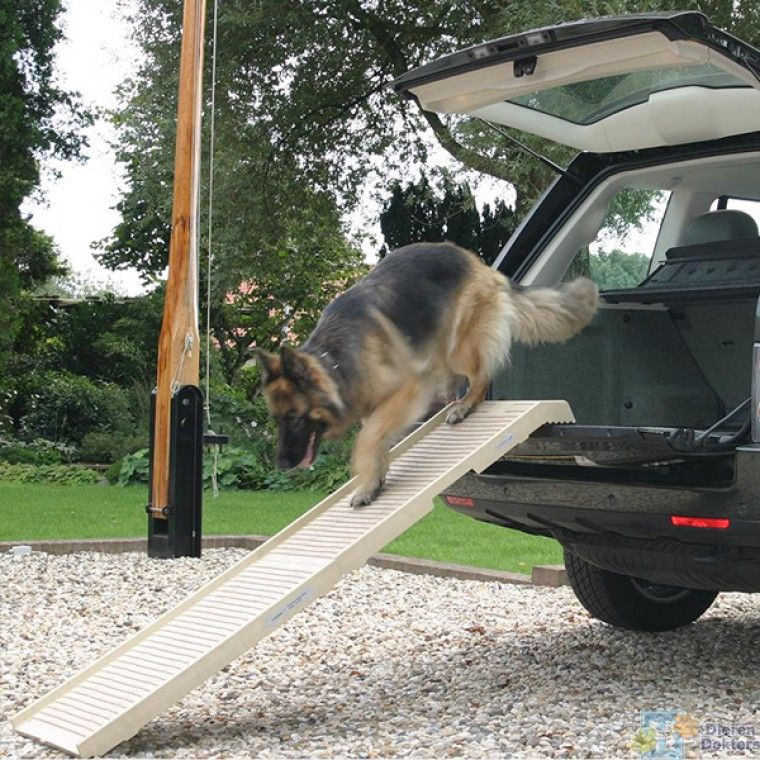 dogstep loopplank auto hond 6