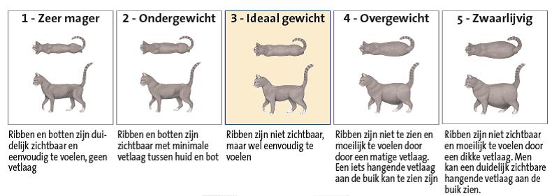 over gewicht conditiescore kat