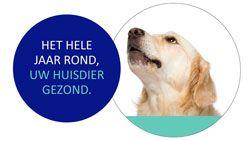 Zorgplan hond module