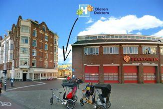 Dierenarts-amsterdam-00