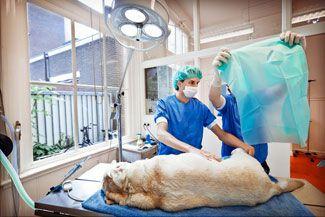 dierenkliniek-amsterdam-04