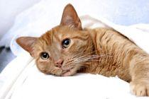 katten_ziekten.jpg