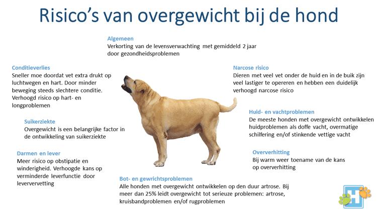 overgewicht artrose hond