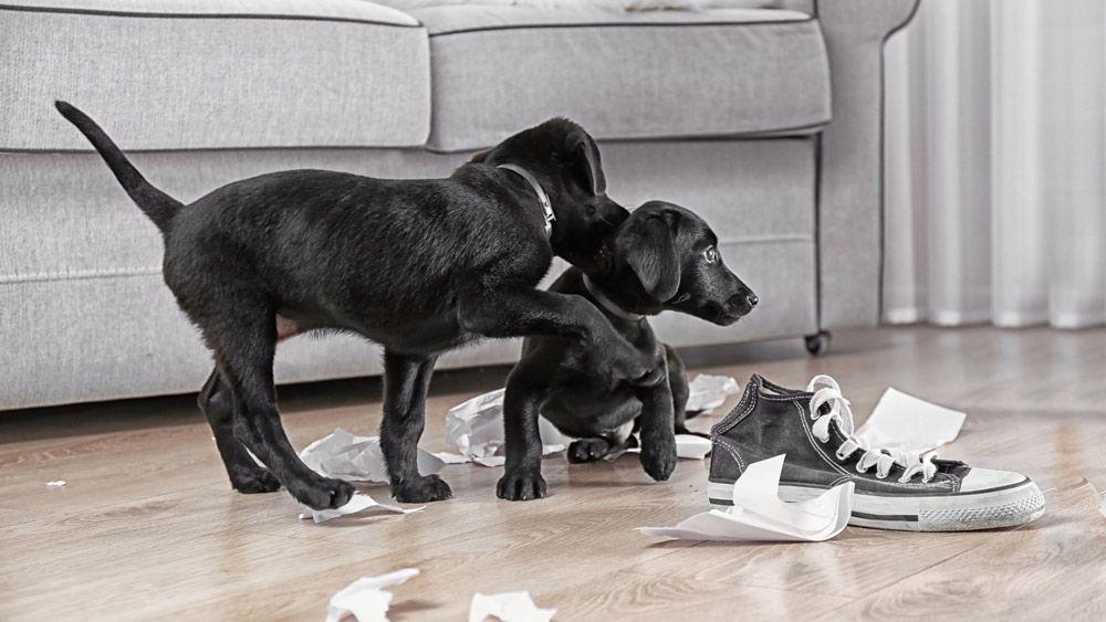 socialisatie opvoeding pup