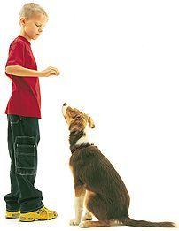 Opvoeding en socialisatie pup