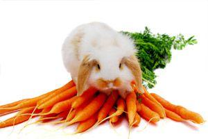 konijnen