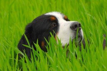 Boy houdt van gras