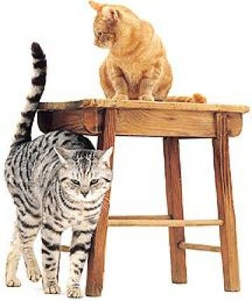 https://www.dierendokters.com/media/zoo/images/katten%20op%20tafel_7644cb00361e1252ed1af8e8868da889.jpg