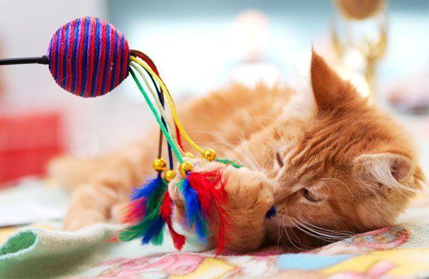 Spelen met je kat