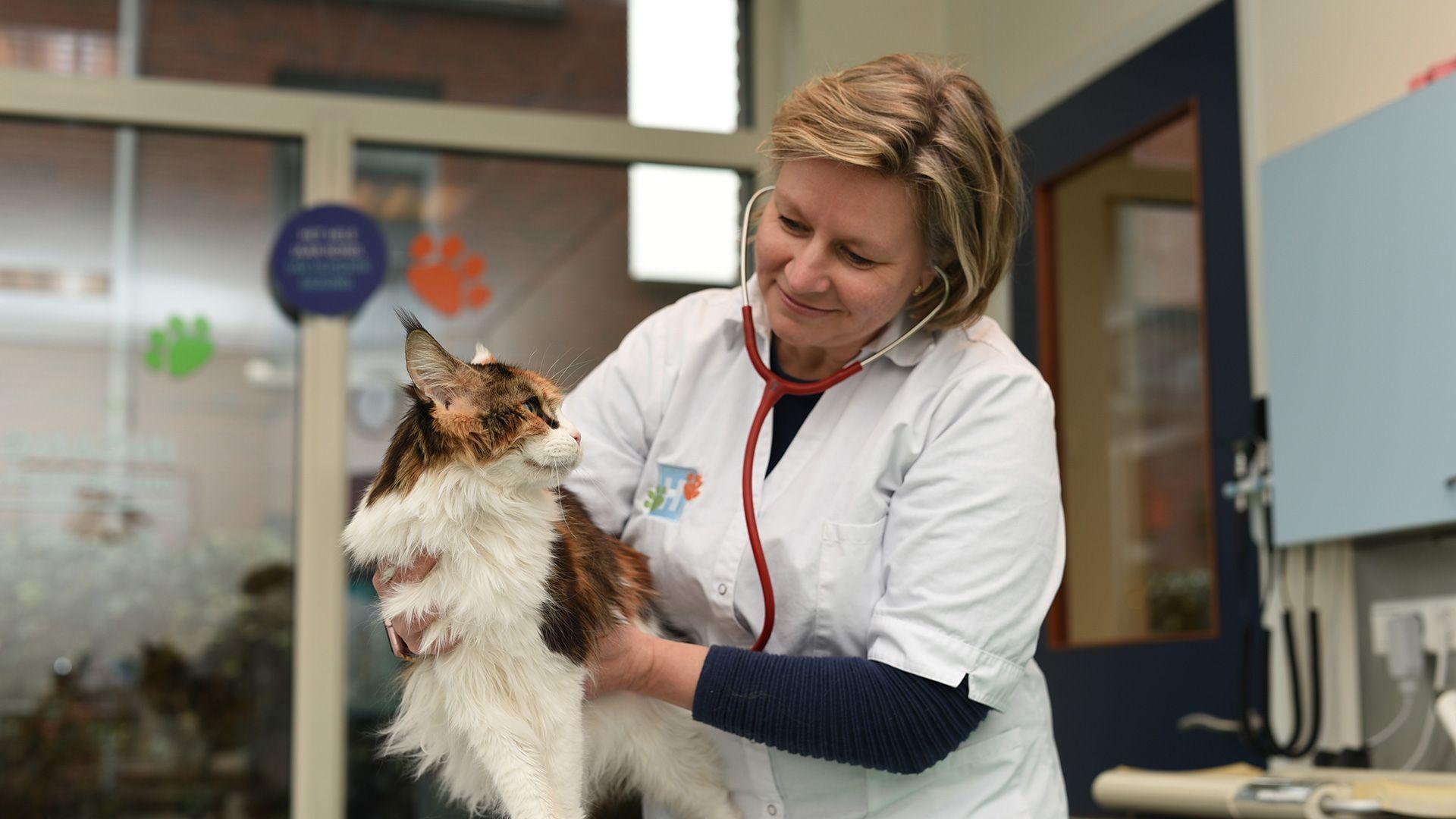 DierenDokters dierenarts dierenkliniek